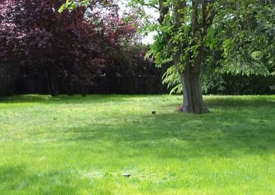 mantenimiento-jardines-valladolid-3